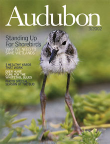 Audubon magazine cover